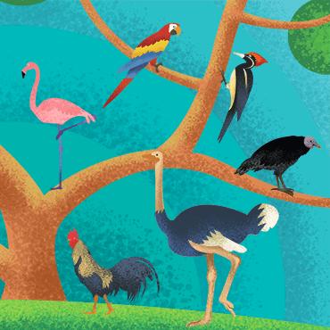 Birds / Pássaros
